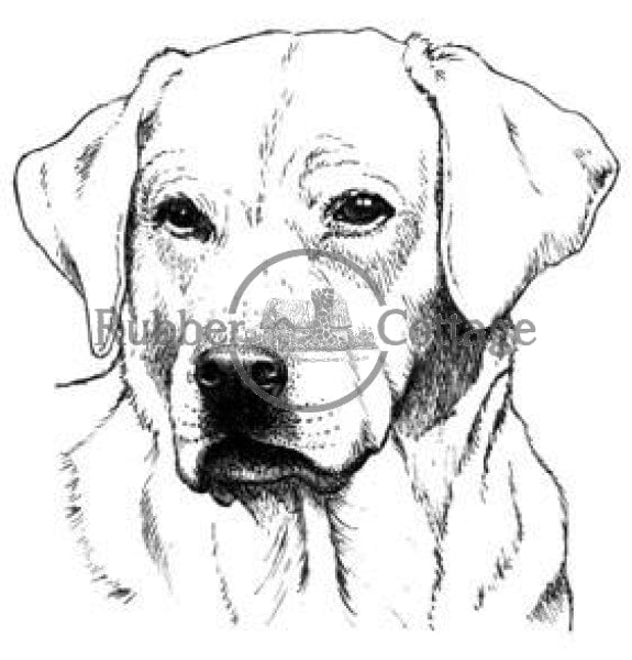 Yellow Labrador Lg. Rubber Stamp
