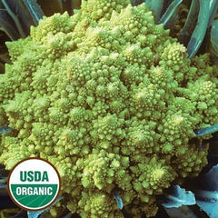 Seed Savers Exchange Cauliflower, Romanesco (Organic)