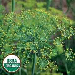 Seed Savers Exchange Herb, Dill Bouquet (Organic)
