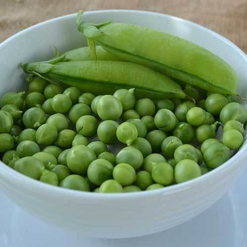 Seed Savers Exchange Pea, Extra Early Pedigree