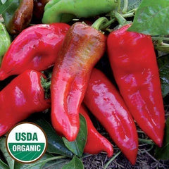 Seed Savers Exchange Pepper, Tolli's Sweet Italian (Organic)