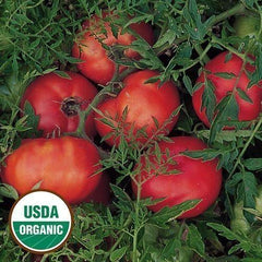 Seed Savers Exchange Tomato, Silvery Fir Tree (Organic)
