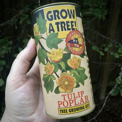 Tulip Poplar | Seed Grow Kit