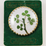 Real Shamrock Brooch From Ireland