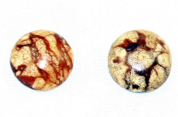 Tiger Coral Round Cabochons