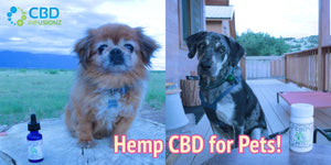 Where To Start With CBD For Your Pet