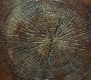 Concrete Stamp - Wood Log End Grain Circle