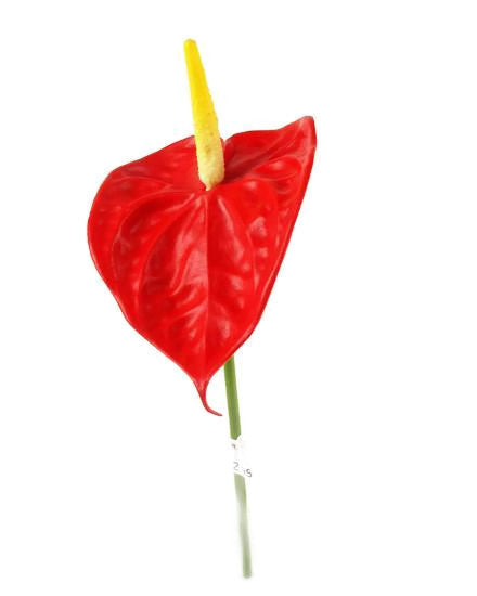 Anthurium GL12324_Red