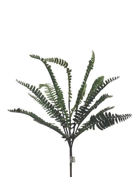 Boston Fern Bunch FB0043-C