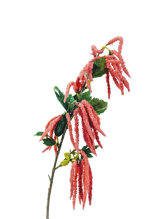 Mini Amaranthus Spray EE0009-CO
