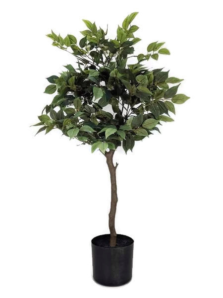 Ficus Tree Small - GF80062