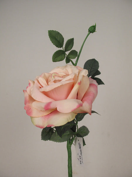 Large Open Rose S5714_SPNK