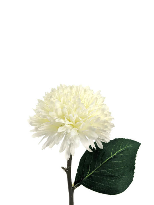 Chrysanthemum FB0039-WH