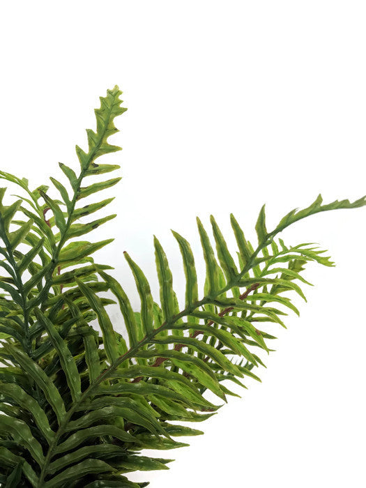 Fern Bunch FB0043-B
