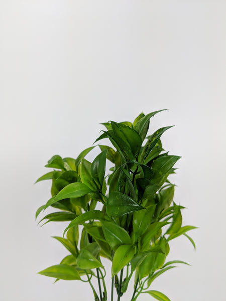 Ruscus greenery Bunch LX0003