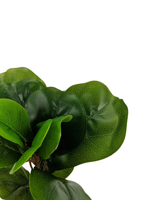 Fiddle Leaf SPRAY LB008