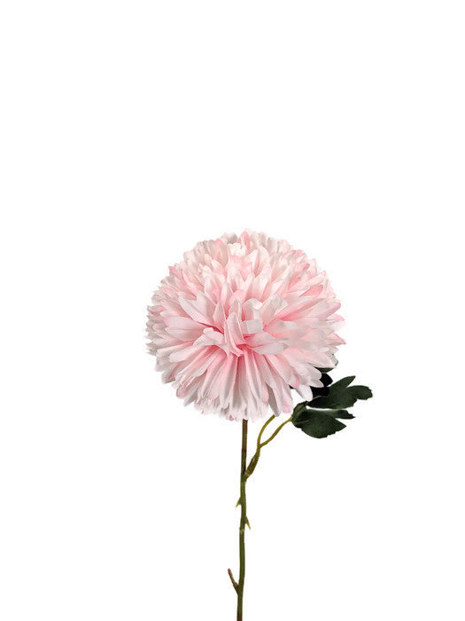 Chrysanthemum tall LB058-PNK