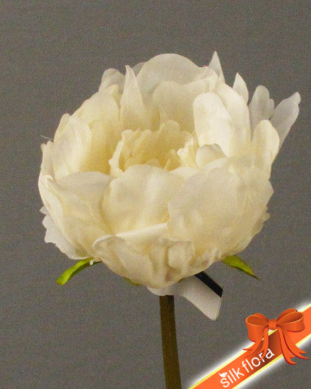 Single Peony GL12543-CR