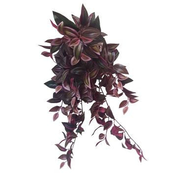 Hanging Wandering Jew bush S2659