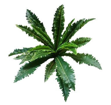 Margaritum Fern Bush GF80007