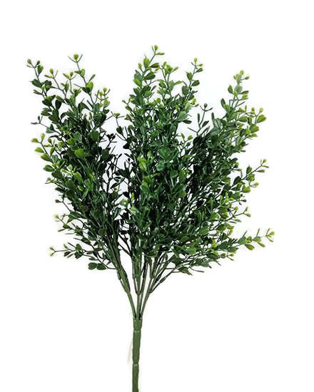 Boxwood Bush S2662
