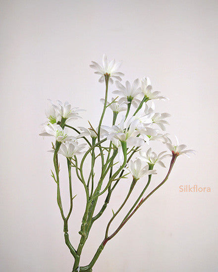 Sea Aster S9862