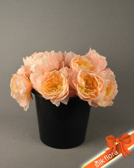 Single Peach Peony GL12566