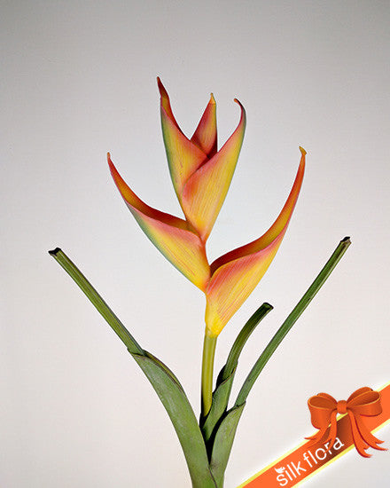 Real Tall Touch Heliconia UI003