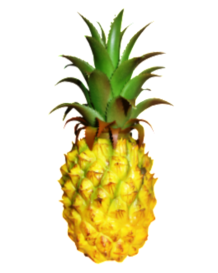 Real Touch Pine apple A3009