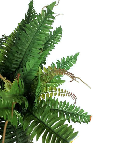 Boston Fern GF80030S