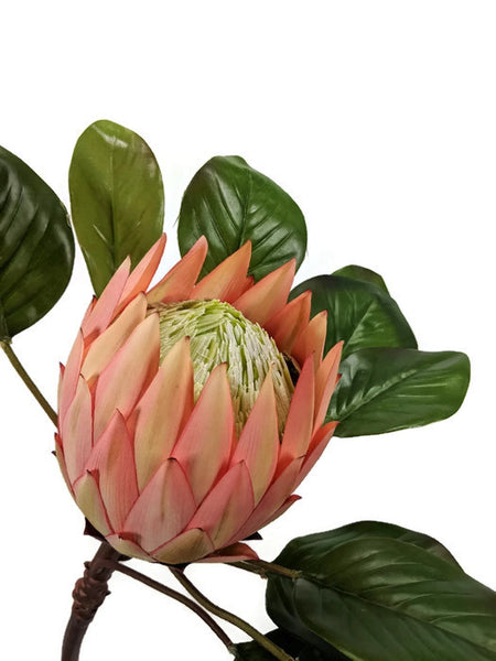 LARGE SINGLE PROTEA EE037-PCH