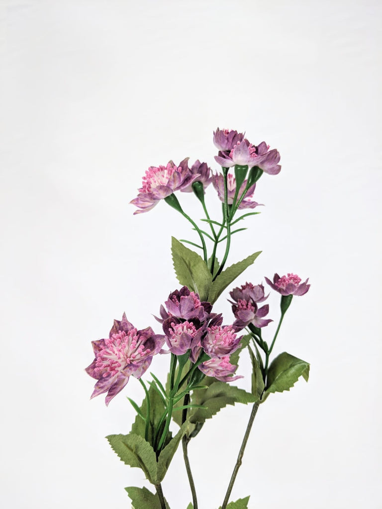 ASTRANTIA SPRAY EE0029-BBL