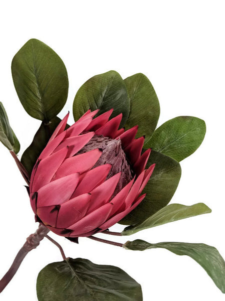 LARGE SINGLE PROTEA EE0037-RD