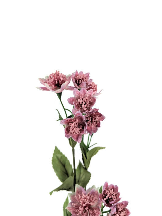 ASTRANTIA SPRAY EE0029-MAV