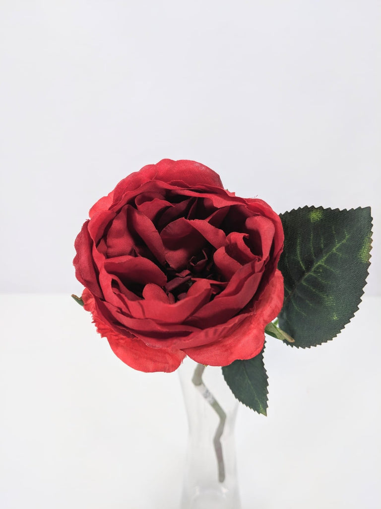 Single David Austin Rose EE0041-COR