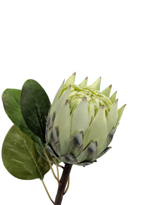 REAL TOUCH PROTEA EE0011-GR