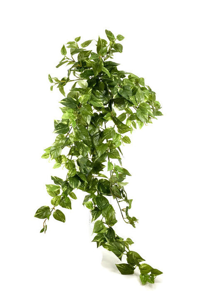 Pothos Hanging bush GF80025-15