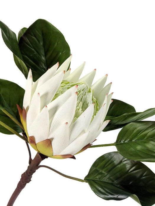 LARGE SINGLE PROTEA EE037-WH