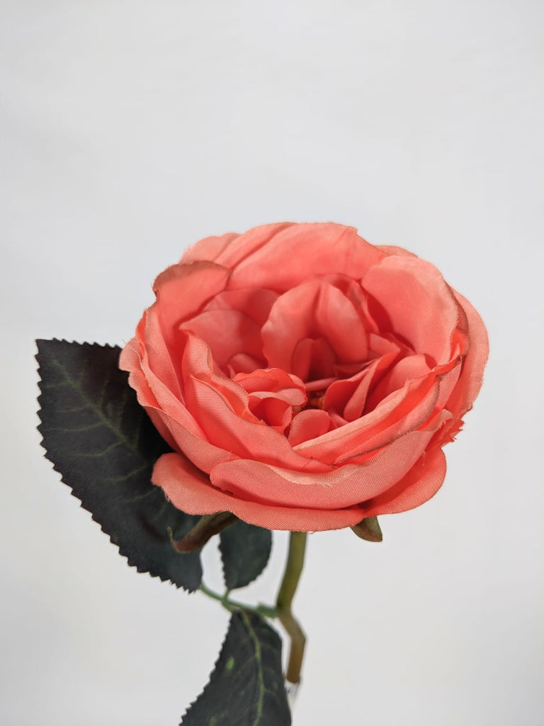 Single David Austin Rose EE0041-GRN