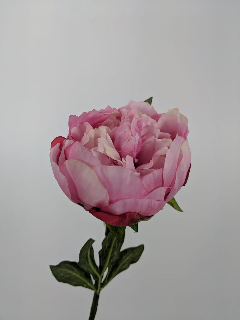 Single Peony Stem JI2608-MAV
