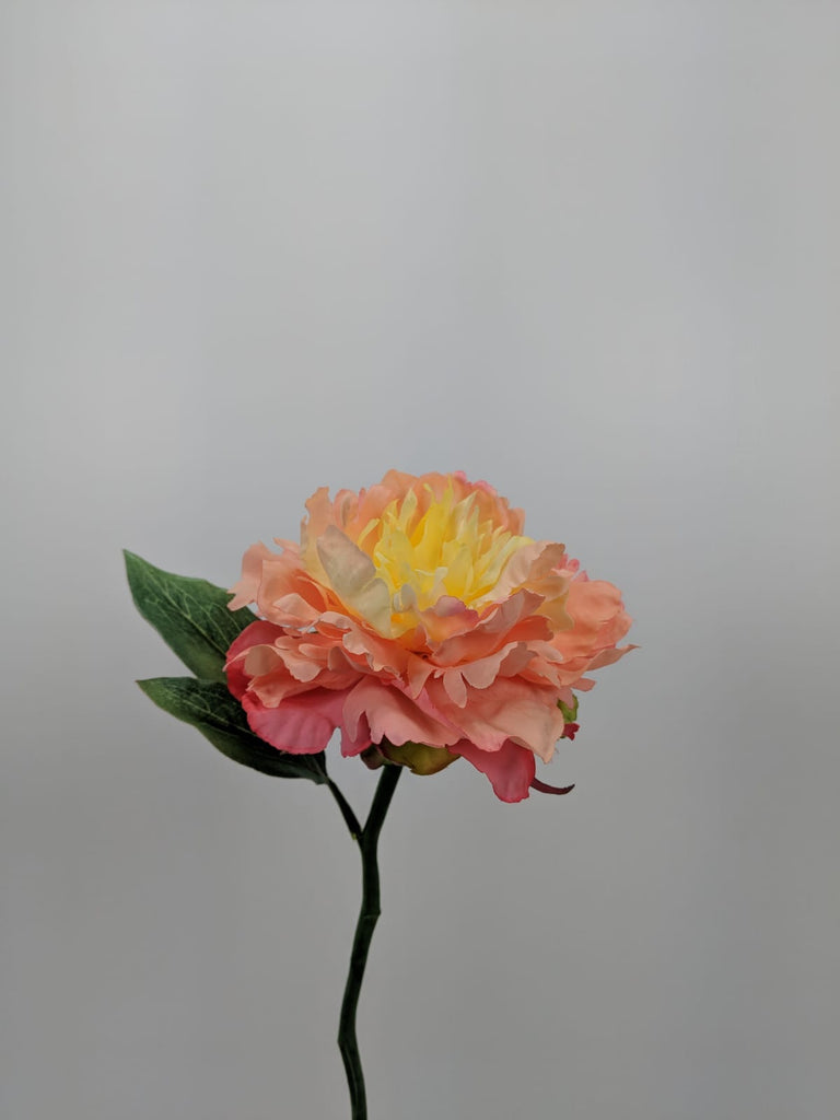 Open Peony S5761-PCH