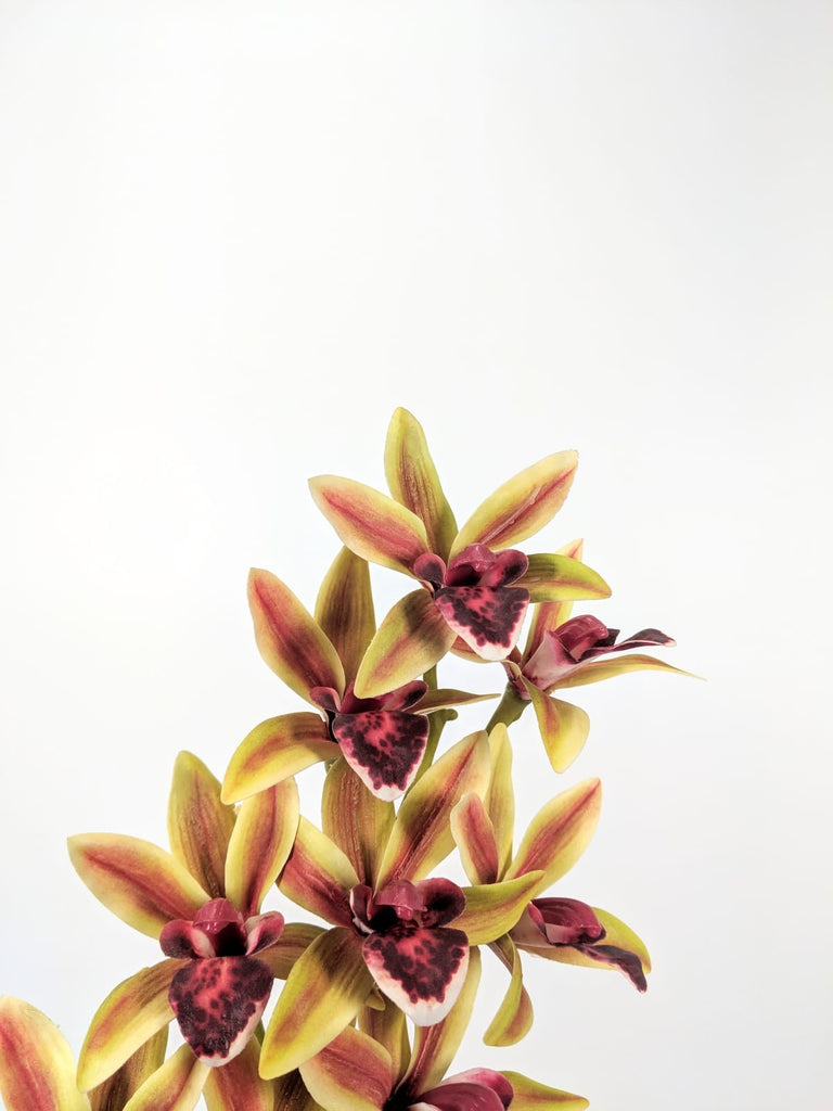 SPIDER ORCHID SPRAY EE0008-GR