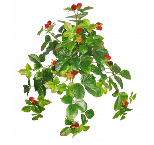 HANGING RASPBERRY BUSH  S2660GRN