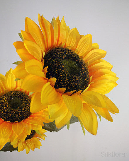 Extra Large Sunflower x 3 heads HF2905