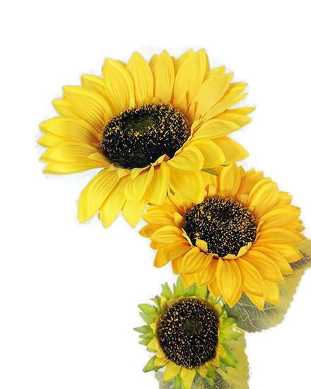 Large Sunflower x 3 heads HF2905