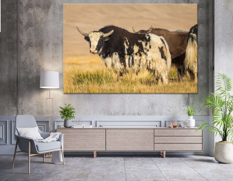 Wild Yak on pasture in the Pamir Mountains №04137 Ready to Hang Canvas Print