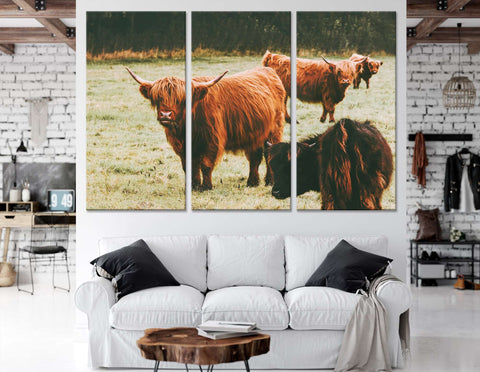 Scottish Highland Cattle №04124 Ready to Hang Canvas Print