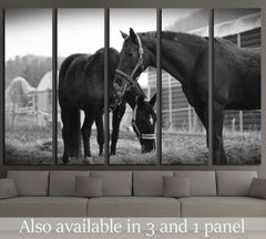 Black and white horse wall art №5008