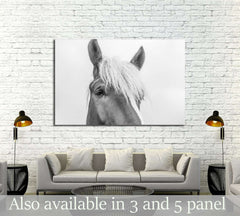 Closeup horse wall art №5007