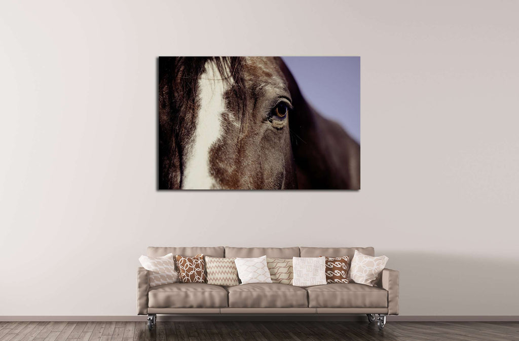 Closeup horse canvas print №5017
